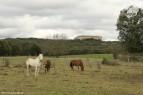 Riofrio-marzo-2012-terranatur06
