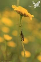 Primavera en las Hurdes 2012